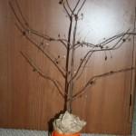 Crafty Tuesday: A Thankful Tree