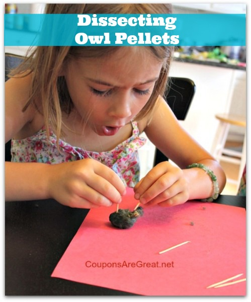 kid-amazed-dissecting-owl-pellets