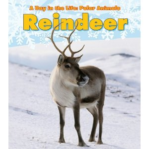 reindeer book a day in the life