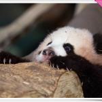 Zoo Atlanta: 1 Adult + 1 Child for $10!!!