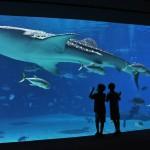 Georgia Aquarium Discount