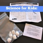 Science Experiments for Kids: Dissecting Owl Pellets